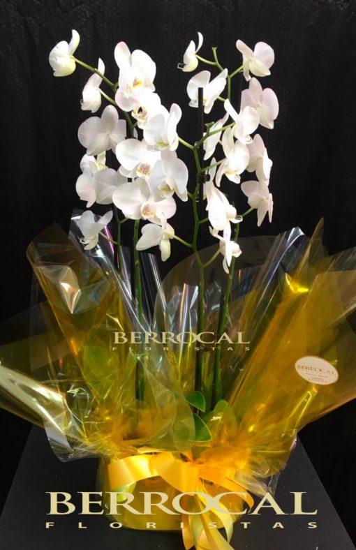 Arreglo de 2 plantas de Orquídeas phalaenopsis blancas. En base de cerámica.