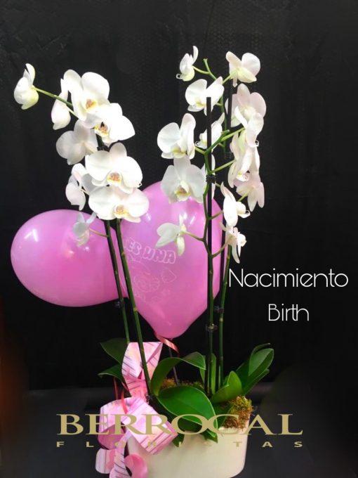 2 Plantas de Orquídea Phalaenopsis blancas, en base de cerámica. Con globos nacimiento bebé.