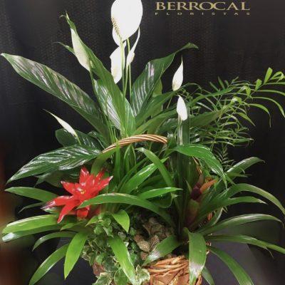 Composición de plantas, en cesta.