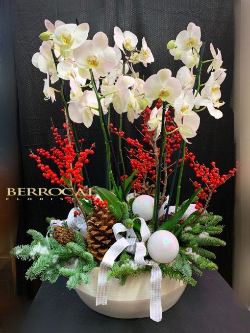 Arreglo Navidad con Orquídeas. Plantas de Phalaenopsis, abeto, piñas y decoración navideña. En recipiente de cerámica.